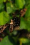 Escarabajo que se acopla en la hoja verde Imágenes de archivo libres de regalías