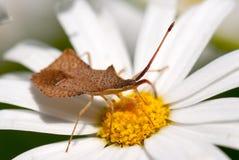 escarabajos Fotos de archivo libres de regalías