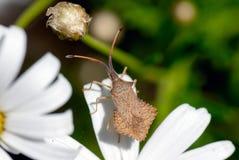 escarabajos Fotografía de archivo libre de regalías