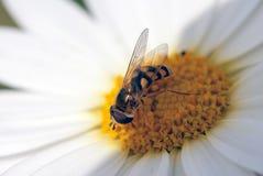 escarabajos Imagen de archivo libre de regalías
