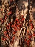 escarabajos Foto de archivo