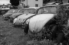 Escarabajos abandonados el viejo aherrumbrar de Volkswagen Foto de archivo libre de regalías