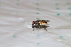 Escarabajos, arañas, insectos Fotografía de archivo libre de regalías