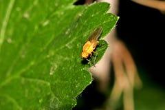 Escarabajos, arañas, insectos Fotos de archivo