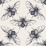Escarabajos con el modelo inconsútil del vintage de las alas Foto de archivo libre de regalías