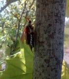 Escarabajos de Brown Fotografía de archivo libre de regalías