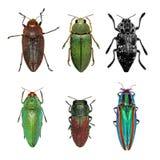 Escarabajos de la joya Foto de archivo libre de regalías
