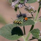 Escarabajos de la vida Imágenes de archivo libres de regalías