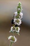 Escarabajos de la vida Fotografía de archivo libre de regalías
