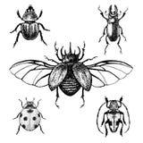 Escarabajos dibujados mano fijados Fotografía de archivo