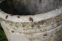 Escarabajos el vacaciones Fotos de archivo libres de regalías