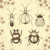 Escarabajos exhaustos de la mano de diversas especies libre illustration