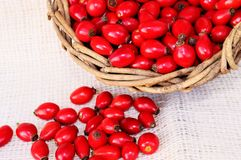 Escaramujos rojos Fotos de archivo