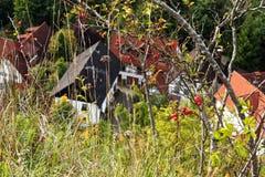 Escaramujos y altas hierbas sobre casas fotografía de archivo libre de regalías