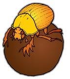 Escaravelho em uma bola Imagem de Stock