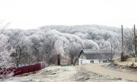 Escarcha blanca en árboles en el campo Imagen de archivo