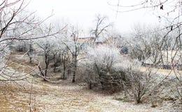 Escarcha blanca en árboles en el campo Fotos de archivo libres de regalías