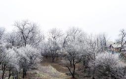 Escarcha blanca en árboles en el campo Fotos de archivo