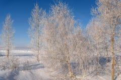 Escarcha de la helada de la nieve de los árboles del invierno Fotografía de archivo