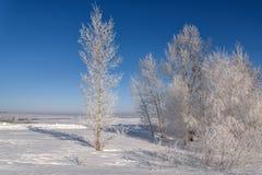 Escarcha de la helada de la nieve de los árboles del invierno Fotos de archivo