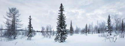 Escarcha de la picea del panorama del bosque del Año Nuevo del invierno blanco y negro Fotos de archivo
