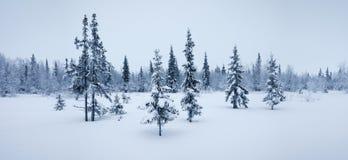 Escarcha de la picea del panorama del bosque del Año Nuevo del invierno blanco y negro Foto de archivo libre de regalías