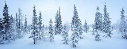 Escarcha de la picea del panorama del bosque del Año Nuevo del invierno blanco y negro Imágenes de archivo libres de regalías