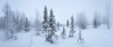 Escarcha de la picea del panorama del bosque del Año Nuevo del invierno blanco y negro Foto de archivo