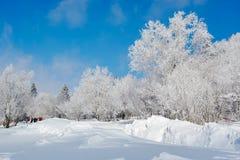 Escarcha dura da neve da floresta e do céu azul Fotografia de Stock Royalty Free