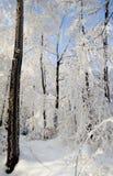 Escarcha dura en bosque Imagen de archivo libre de regalías