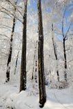 Escarcha dura en bosque Imagenes de archivo