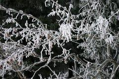 Escarcha en árboles Fotos de archivo libres de regalías