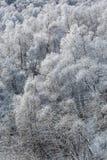 Escarcha en árboles de abedul en las montañas Foto de archivo libre de regalías