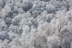 Escarcha en árboles de abedul en las montañas Imágenes de archivo libres de regalías