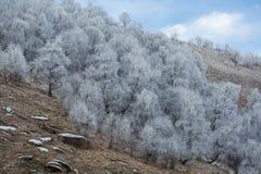 Escarcha en árboles de abedul en las montañas Foto de archivo