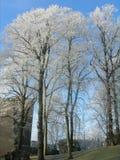 Escarcha en árboles en el invierno en el parque de Lovaina, Belgium3 foto de archivo