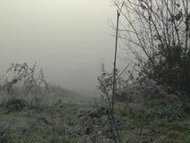 Escarcha en arbustos en la niebla, con el sol en el horizonte metrajes