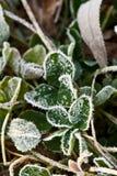 Escarcha en hierba verde Foto de archivo