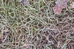 Escarcha en la hierba y las hojas fotografía de archivo