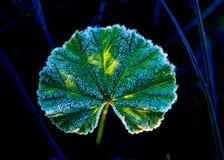 Escarcha en la hoja verde Foto de archivo libre de regalías