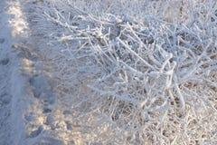 Escarcha en las coronas de arbustos Imagen de archivo