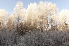 Escarcha en las ramas de árboles Imagenes de archivo