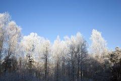 Escarcha en las ramas de árboles Fotos de archivo libres de regalías