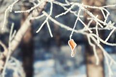 Escarcha en los árboles en bosque del invierno Imagen de archivo