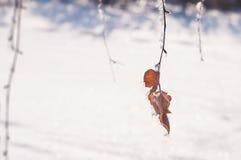 Escarcha en los árboles en bosque del invierno Fotografía de archivo
