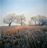 Escarcha en niebla fotografía de archivo libre de regalías