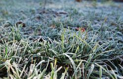 Escarcha en una hierba Fotografía de archivo libre de regalías