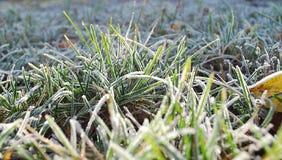 Escarcha en una hierba Foto de archivo libre de regalías