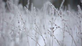 Escarcha hermosa del invierno en la rama metrajes