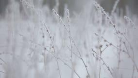 Escarcha hermosa del invierno en la rama almacen de metraje de vídeo